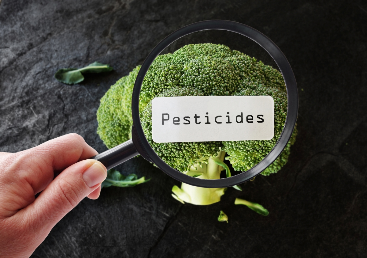 Person examining broccoli and pesticide label